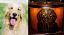 Mica Lamp Shade w/Dog Image