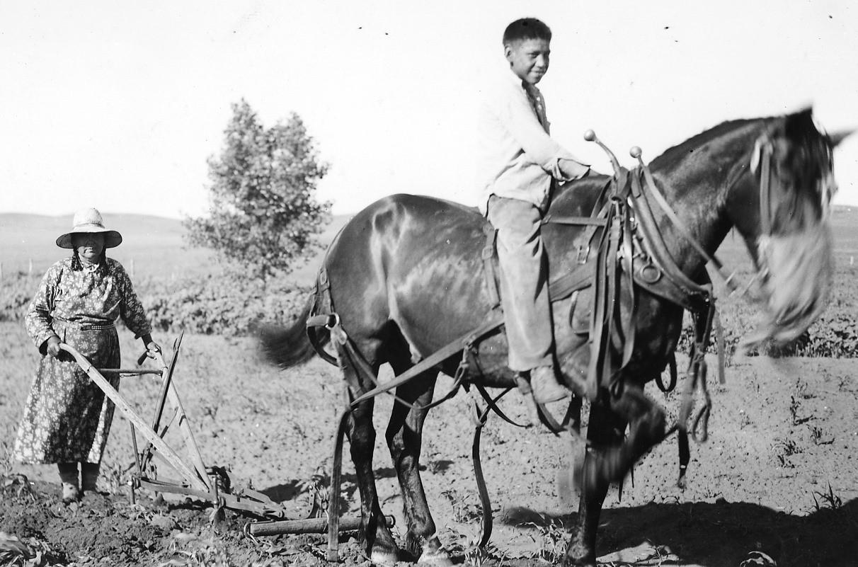 Singletree Horse Harness
